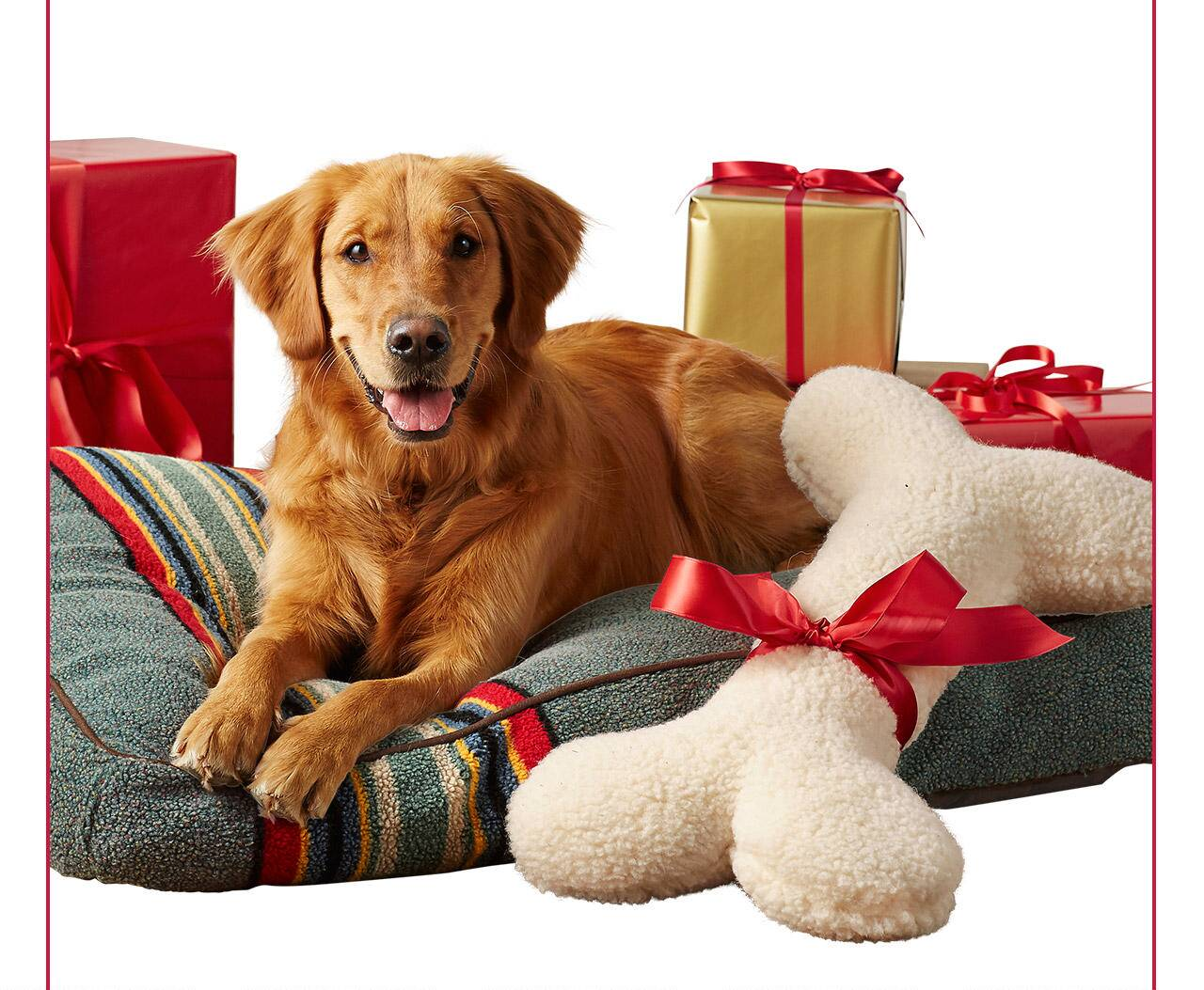 Gifts For Everyone's Best Friend